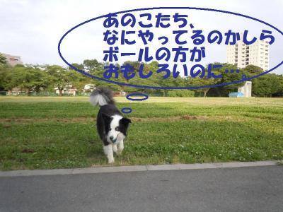 DSCN1103_convert_20110528154409.jpg