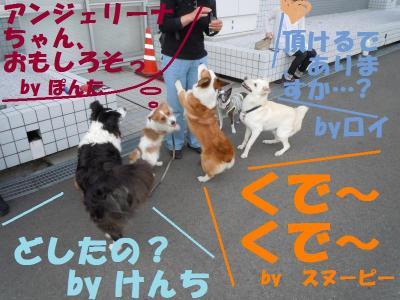 DSCN1106_convert_20110528154620.jpg