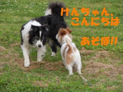 DSCN1107_convert_20110528154734.jpg