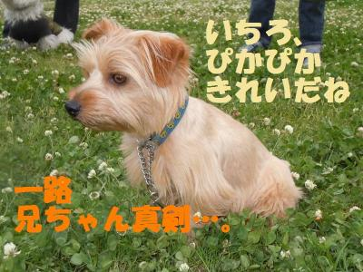 DSCN1138_convert_20110602155724.jpg