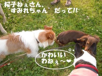 DSCN1153_convert_20110603171145.jpg