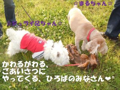 DSCN1155_convert_20110603171242.jpg