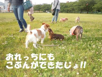 DSCN1158_convert_20110603171504.jpg