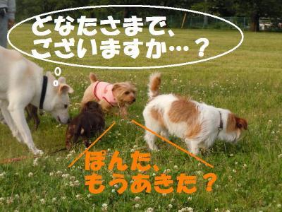 DSCN1159_convert_20110603171547.jpg