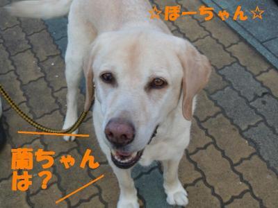DSCN1180_convert_20110609141617.jpg