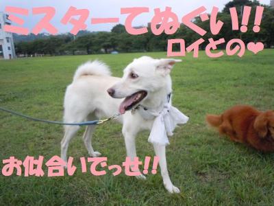 DSCN1864_convert_20110813195013.jpg