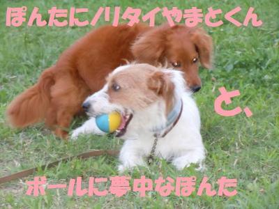 DSCN1889_convert_20110813195245.jpg