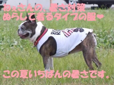 DSCN1895_convert_20110819151530.jpg