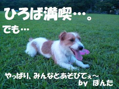 DSC_0075_convert_20110813195518.jpg
