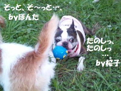DSC_0095_convert_20110818161615.jpg