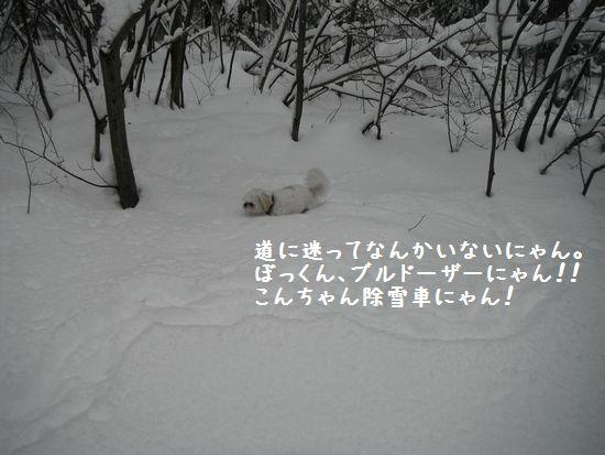 01031305.jpg