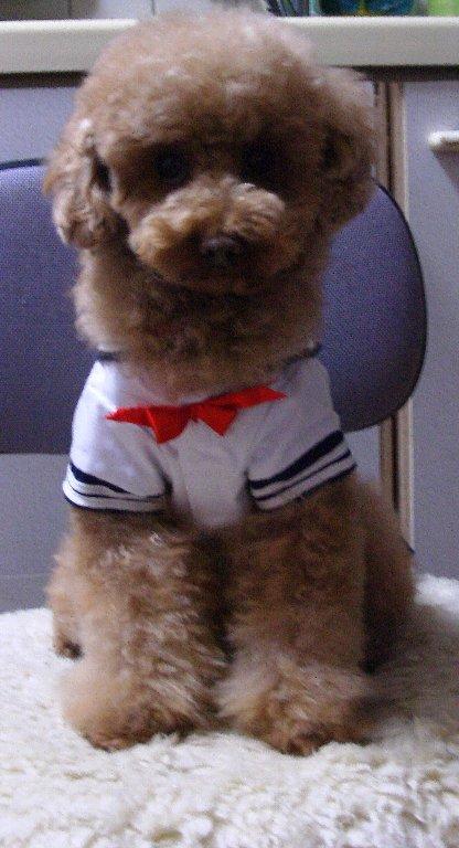 女子高生犬