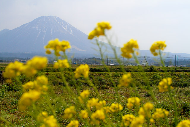 植田正治記念館 菜の花