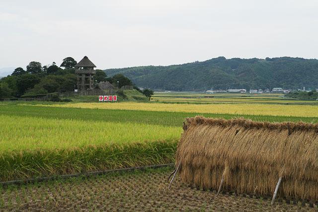 農村 稲刈り