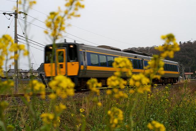 鉄道 菜の花