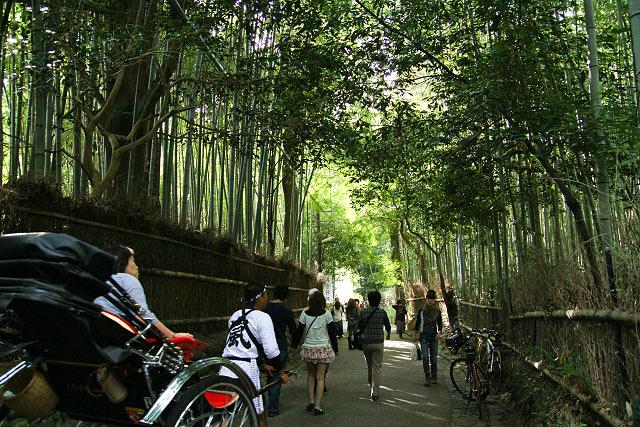 京都 嵐山 嵯峨の観光名所「嵯峨竹林