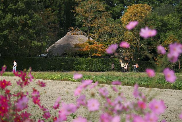 京都 嵐山 嵯峨 落柿舎