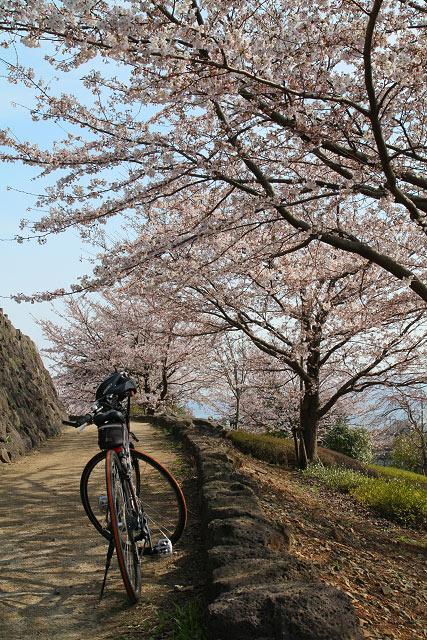 大塚山 大根島 桜