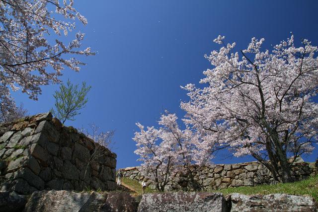 米子市湊山公園~米子城山 桜祭り