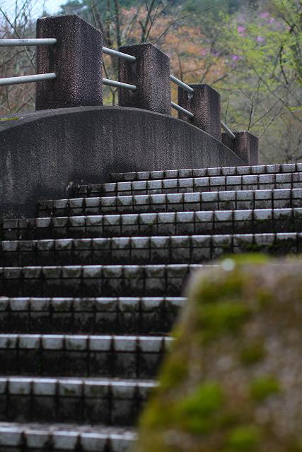 日野町~滝山公園 ツツジ