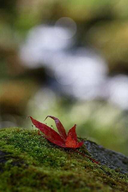 奥大山の秋~木谷沢渓谷
