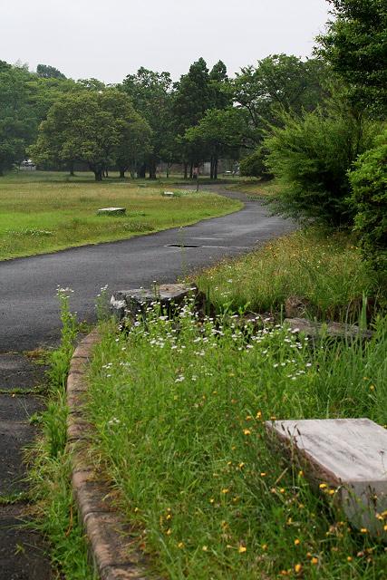 福市遺跡公園(紫陽花編)