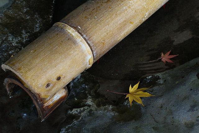 鳥取県米子市宗像「宗形神社」の紅葉