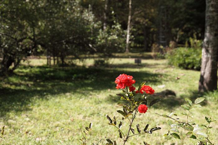 1010懐かしい庭園06