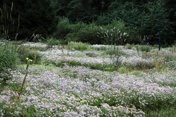 1010不思議な庭園09