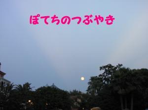 IMG_6623convert_20100826160818.jpg