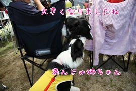 201108081310.jpg