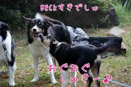 201108081313.jpg