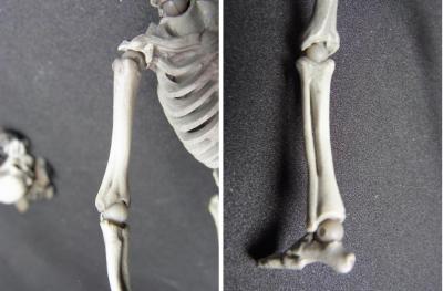 リボルテック骸骨剣士関節