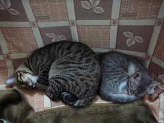 猫はこたつで丸くなる~♪