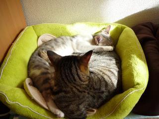 猫パズル2