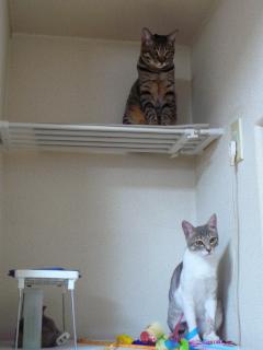 招き猫になりたくて