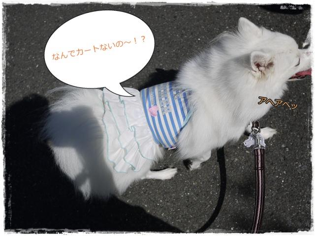 13_20101012195338.jpg