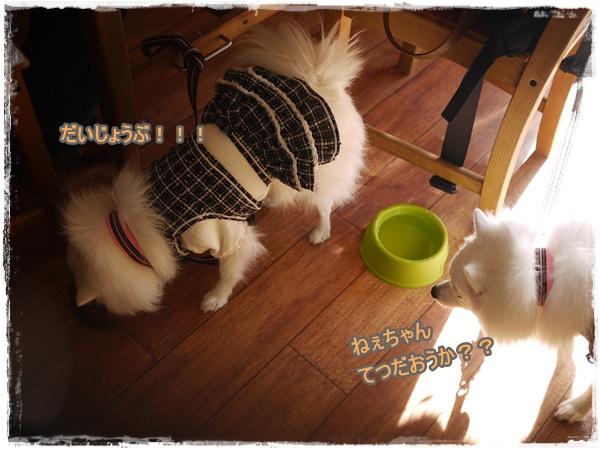 21_20110111094649.jpg