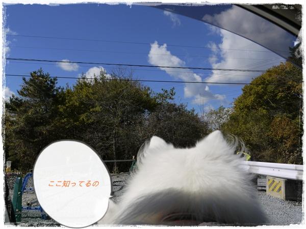 5_20101107072438.jpg