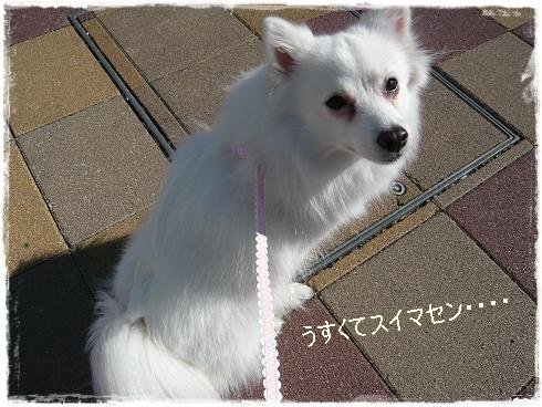 P1000267_20100420203246.jpg