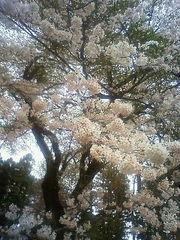 4.11 siroyama