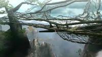 渓流(2)