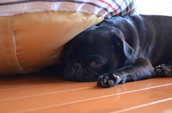 ベッドは被る方が暖かいんだよ