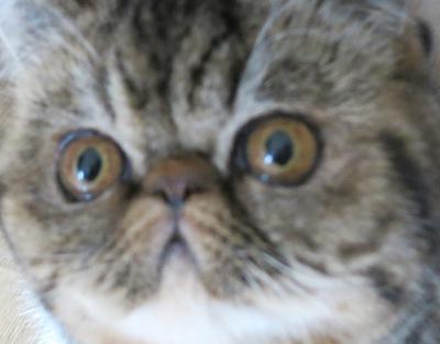 6)ネコ・・・?なんでつか?