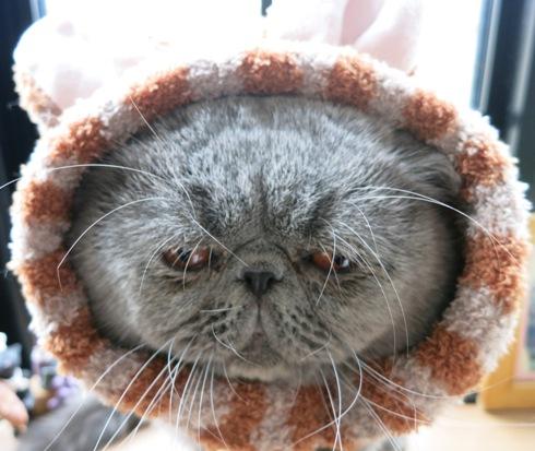 9)寒い時にはコレでずよ♡