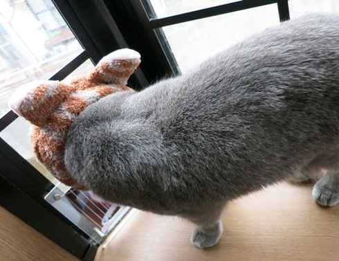 1)一応ネコです。
