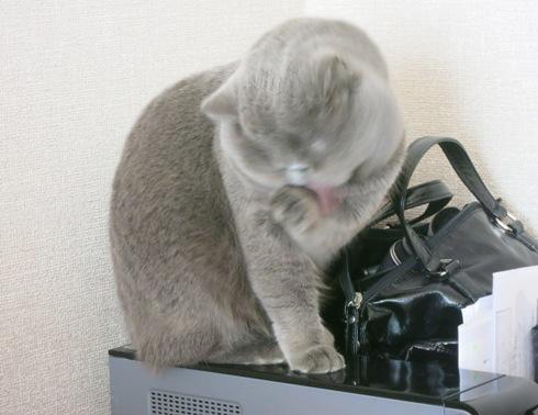 1)猫耳ちゃんはおせんたく