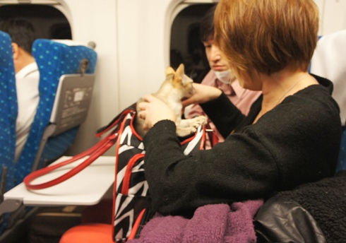 4)かわいいバッグからカレンちゃんこにゃにゃちは