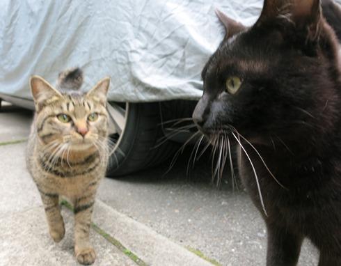 4)サバ子もちょっと仲良くなりました