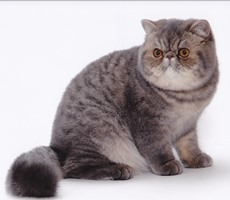プラグイン2010-2011 18th regional winner GC,RW COUJEE BLUE OWL OF PUKU2 ①